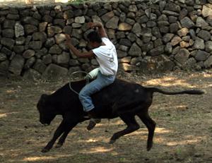 bull riding in Costa Rica