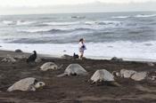 Costa Rica Turtle Nesting