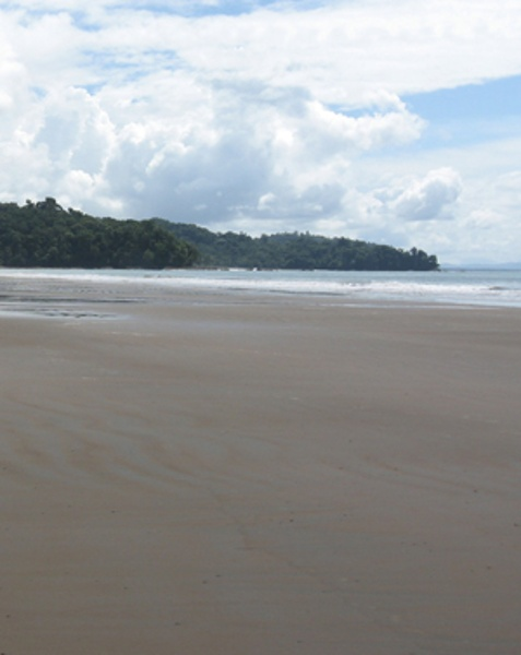 This is playa Ballena at low tide, notice there's not a single stone on the beach